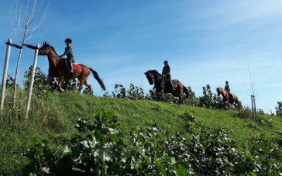 Met Zijn Allen Te Paard Door De Mooie Zeeuws-Vlaamse Natuur