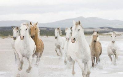 Training: Omgaan Met Emoties, Met Behulp Van Paarden