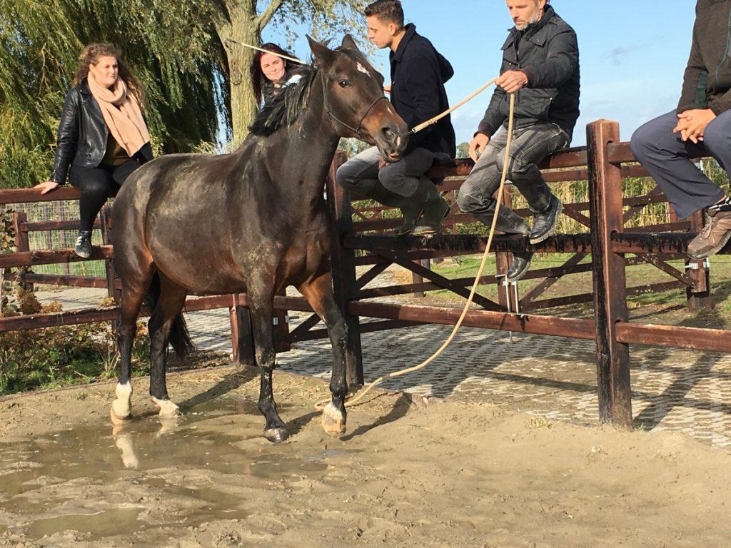 Door samen te werken, wordt het paard in de goede richting geleid.