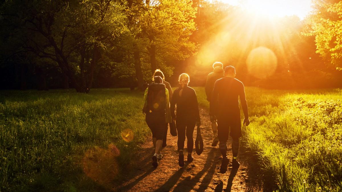De Paden Op De Lanen In: Wandeltrainingen