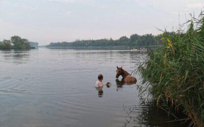 Jan Van Blarikom Te Water Met Therapiepaard Hope