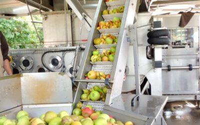 Fruitpersdag Landschapsbeheer Op De Kraaghoeve